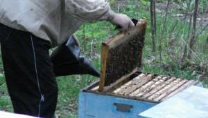 Обработка пчел осенью