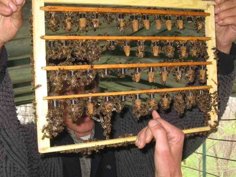 Как сделать матку для пчел 230