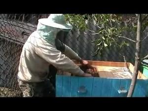 Пересадка пчелосемей