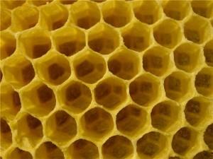 Пустые пчелиные соты