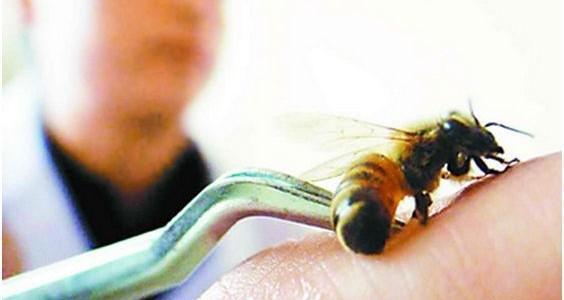 Пчёлы их воздействие на мужской пенис
