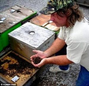 Трагедия для пчеловода