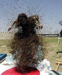 Пчела убийца
