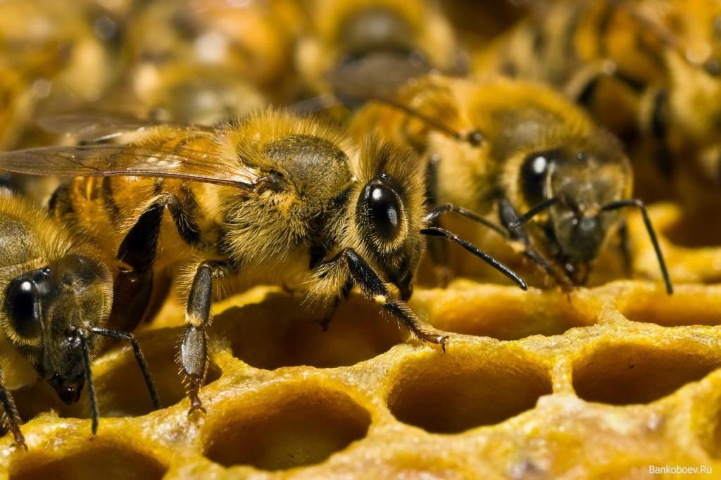 Продукты пчеловодства при лечении рака