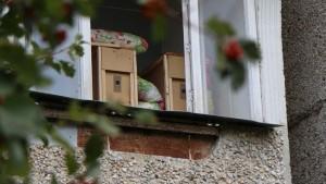Пчелы на городском балконе