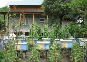 Пчелы в домашних условиях