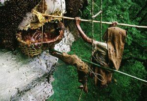 Жилища для пчёл в древности