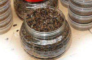 пчелки в банке