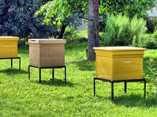 Пчелы улик