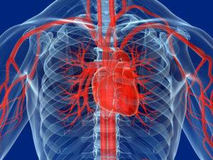 Сердце сосуды