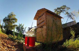 Современные улики для пчел