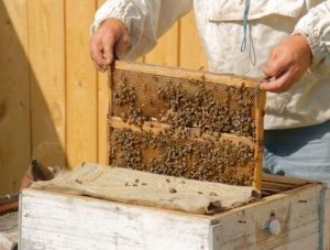 Осенняя обработка пчел