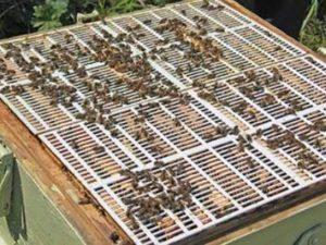 Разделительные решетки для ульев