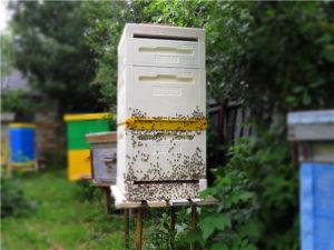 Ульи bee-box